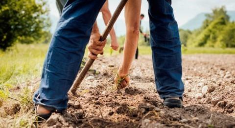 Gobierno balear amplía ayuda crédito circulante sequía agraria
