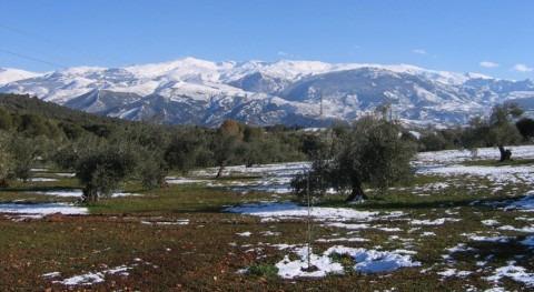 Sierra Nevada pierde carácter alpino debido cambios clima