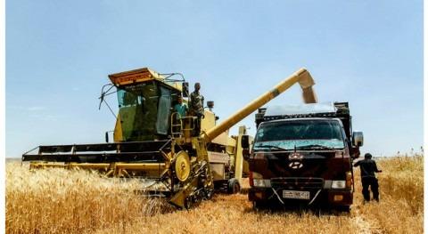 sequía y conflictos, principales responsables inseguridad alimentaria 41 países