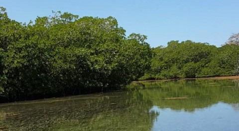 Honduras designa Sistema Humedales Santa Elena como Sitio Ramsar