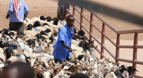 Mercado ganadero en Hargeisa (FAO).