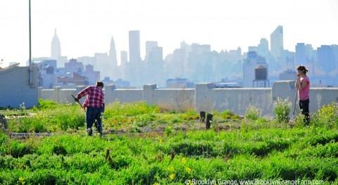 Agricultura urbana: hormigón puede ser verde