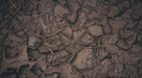 gestión suelos podría determinar éxito o fracaso frente al cambio climático
