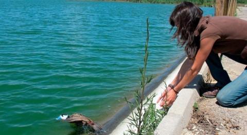 Murcia inicia programa gestión humedales malvasía cabeciblanca