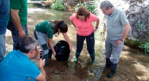 Liberados 5.000 ejemplares trucha común río Guadalentín reproducción