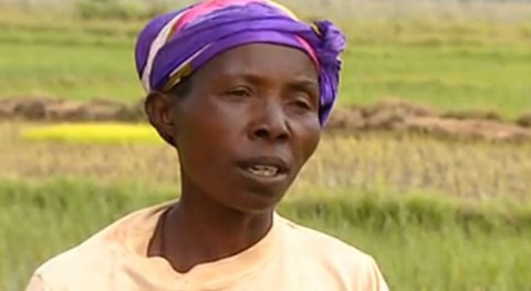 habitantes Burundi recuperan marismas cultivos