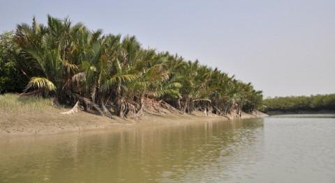 Sundarbans India, designados como Humedales Importancia Internacional