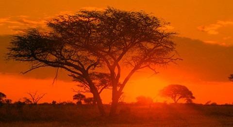 Zimbabue, estado emergencia causa sequía