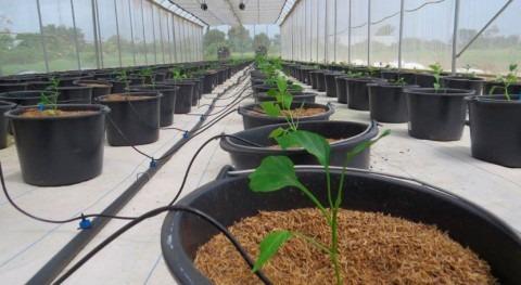 Agricultores Surinam reciben sistemas microirrigación recolección aguas pluviales