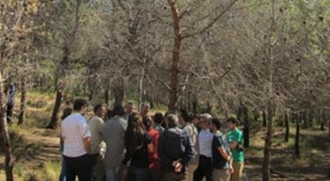 Recomiendan talar los rboles infectados con 39 tomicus 39 en for Cabanas en los arboles comunidad valenciana
