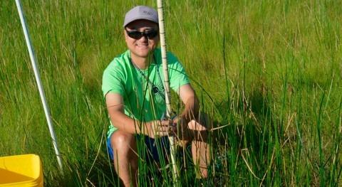 """dióxido carbono alto podría crear """"tallos encogidos"""" pantanos"""
