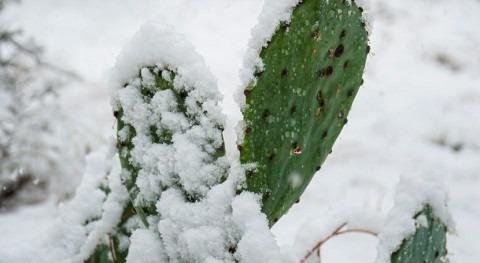 contraste frío y calor registrado febrero, nueva normalidad cambio climático