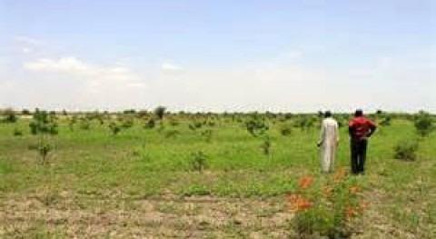Cómo plantar millones árboles desierto: manual usuario