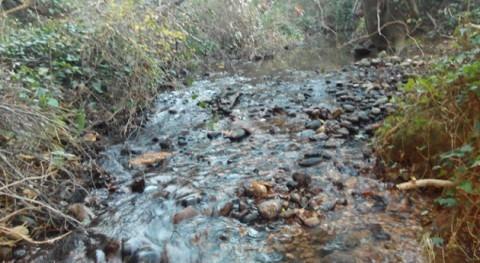 Retirados árboles peligro caer al cauce torrente Vilamalla, Alto Empordà
