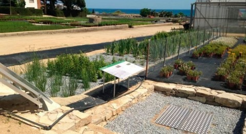 Desarrollan sistema tratamiento lixiviados plantas basado procesos naturales