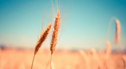 indemnizaciones seguro agrario sequía cereal superarán 100 millones euros