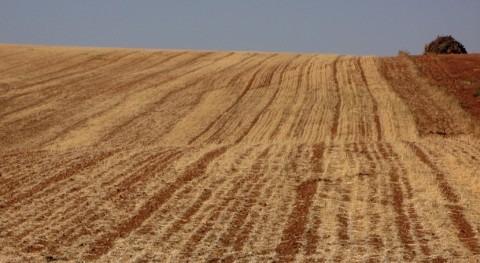 cambio climático aumenta riesgo sequías simultáneas zonas productoras trigo