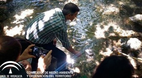 Liberados 10.000 ejemplares trucha común reproducción río Majaceite