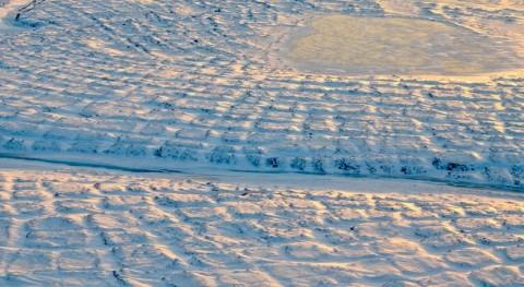 ¿Cómo afecta clima cálido tundra Alaska?