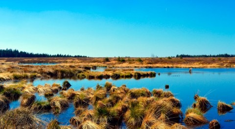 turberas corren peligro transformarse emisoras carbono