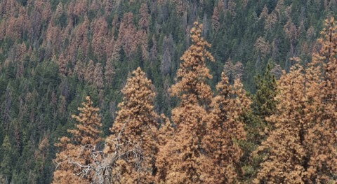 ¿Cambiará vegetación todo mundo aumento sequía?