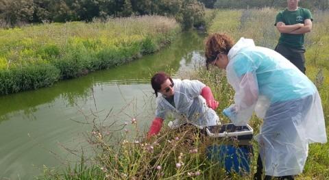 UGR demuestra eficacia método mejorar calidad aguas residuales tratadas