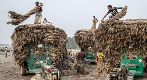 Sequías localizadas, inundaciones y conflictos prolongados perpetúan inseguridad alimentaria