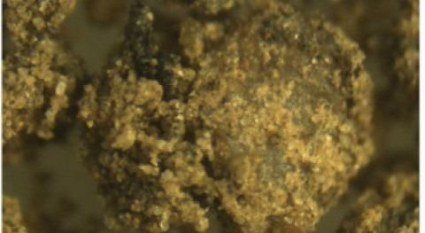 Desarrollan material partir lodos residuales depuradoras que mejora rendimiento agrícola