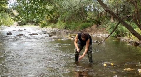 ¿Cómo afecta actividad depuradora ecosistemas fluviales?