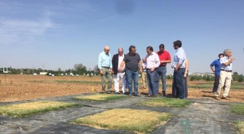 Madrid investiga nuevas variedades césped ahorrar más 50% agua riego