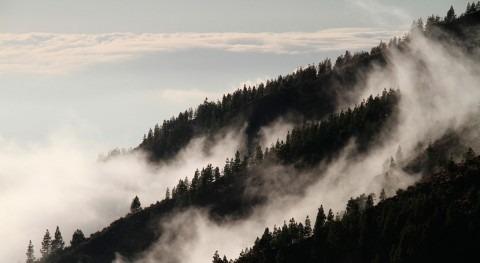 vegetación altera 30% patrones climáticos y meteorológicos