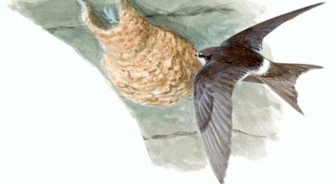 cambio climático desplaza varias aves africanas España