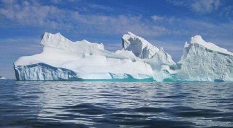 Luminosos veranos árticos convierten bosques algas kelp oasis acidificación