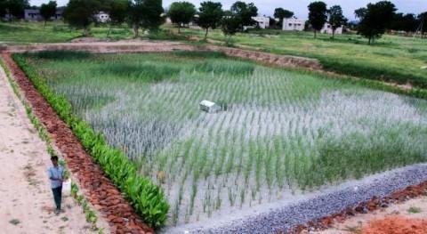 Dos hospitales estado indio Andhra Pradesh tratan aguas humedales artificiales