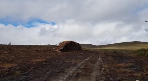 CHD continúa trabajos selvícolas zona aledaña al embalse Villameca