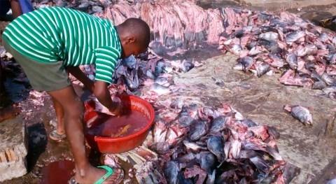 Agua limpia lavar pescado