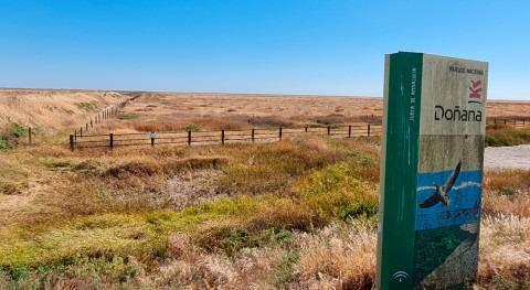 WWF indica que Plan Hidrológico Guadalquivir 2021-2027 no asegura conservación Doñana
