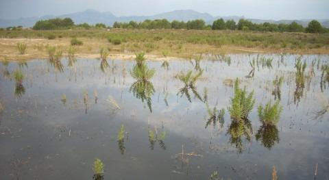 Detenido derrame accidental aguas residuales Can Picafort Albufera Mallorca