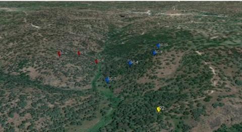 humedad roca dehesa, fuente agua vegetación época sequía