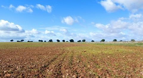 directrices proyecto tierras raras presentado Quantum confirman inviabilidad