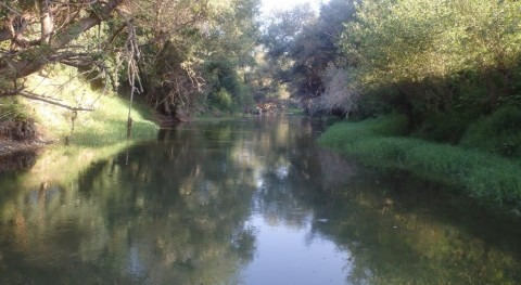 Mejorando hábitat náyades autóctonas río Ebro
