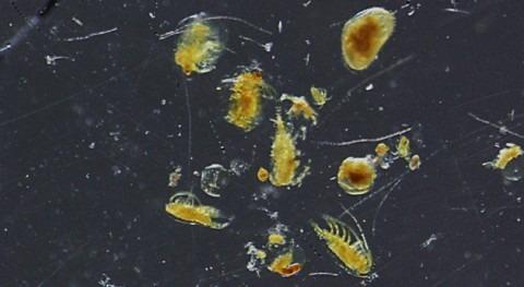 Incremento temperatura, sequía e insecticida, ¿cómo afecta comunidades zooplancton?