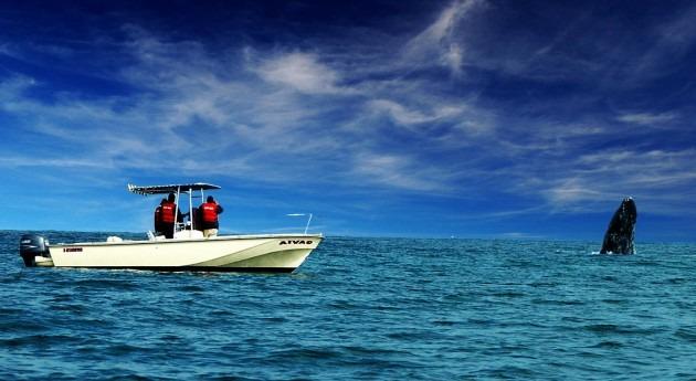 mina amenaza vida gran migrante marino