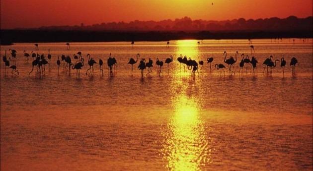 Técnicos WWF constatan puesta marcha nuevos regadíos ilegales Doñana