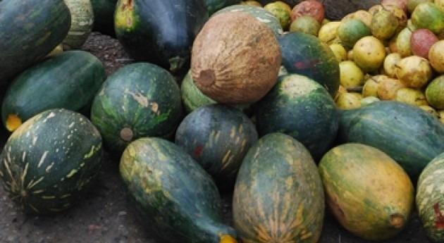 industria agricultura Caribe asume costes fenómenos extremos y empieza declinar