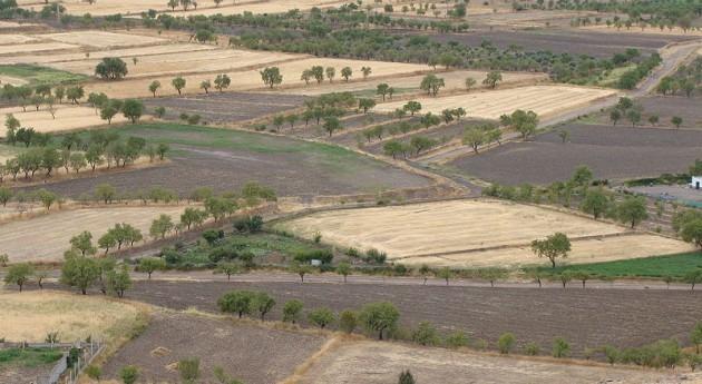 2.000 agricultores y ganaderos murcianos se manifiestan pedir medidas paliar sequía