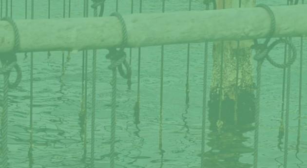 Analizando acuicultura