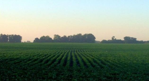 Unilever logra reducir consumo agua campos cultivo 20% cinco años