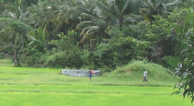 ABSTRESS, proyecto crear cultivos resistentes sequías y enfermedades