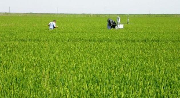 ¿Cómo lograr uso más sostenible agua cultivo arroz?